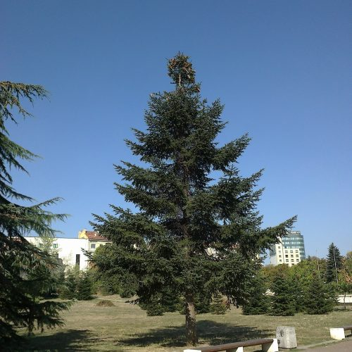 НДК - Парково пространство, 2011г