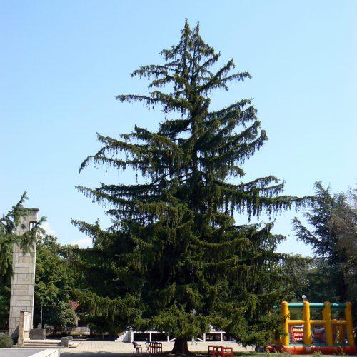 """Парк """"Розариум"""", Казанлък, 2012г"""