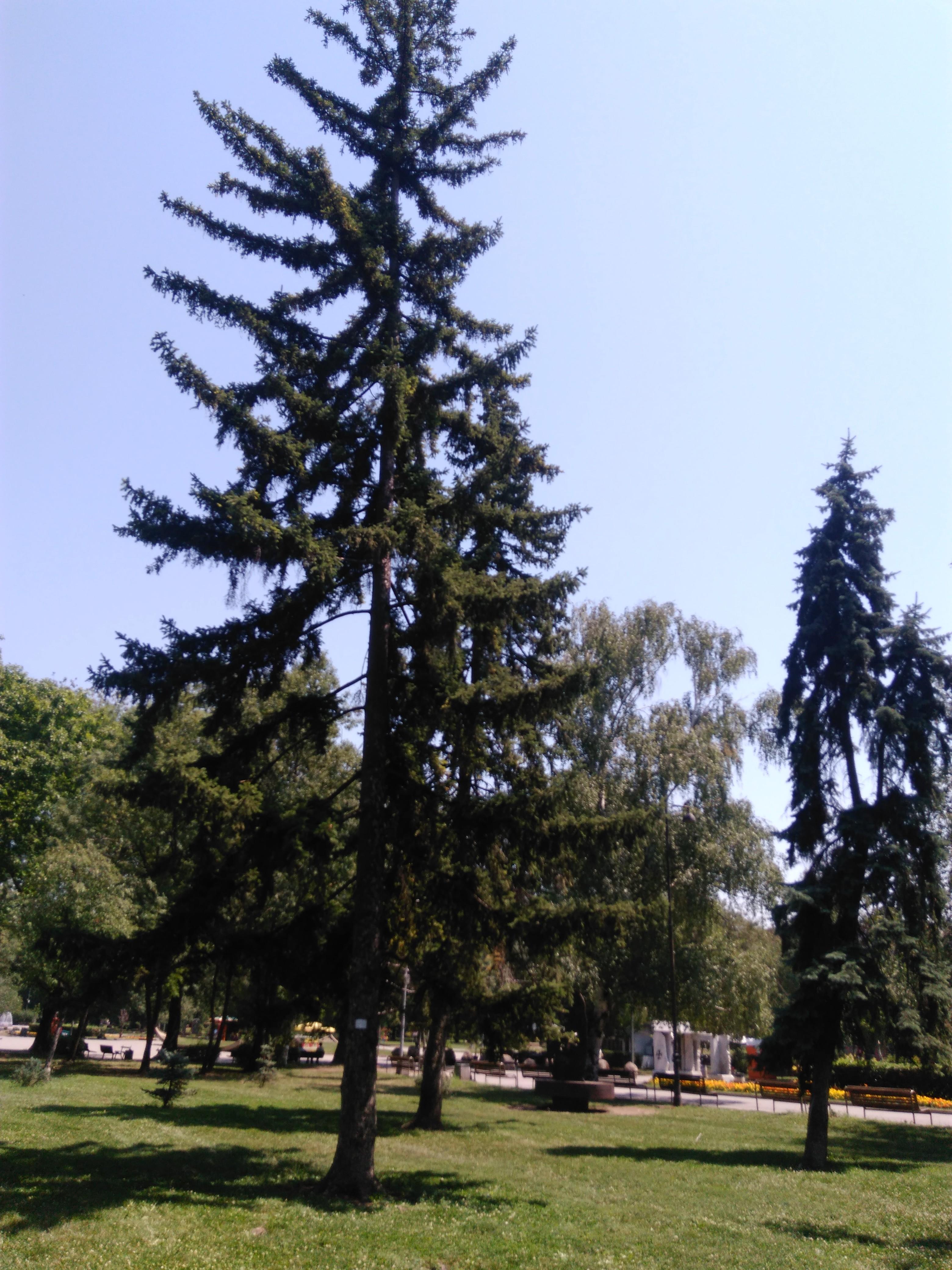 Парк Заимов, София, 2017г